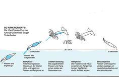 cuttlefish flight - Google 검색