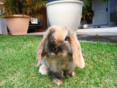 Little Bunny in a Big Yard - August 21, 2011
