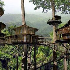 Finca Bellavista Rainforest Village, Costa Rica - a permanent community of treehouses at the base of a rain forest mountain. The goal of the community is to preserve rain forest acreage and promote sustainable living arrangements. Costa Rica, Rainforest Ecosystem, Cool Tree Houses, Forest Mountain, Cabana, Ewok, Tree Tops, Home Pictures, In The Tree