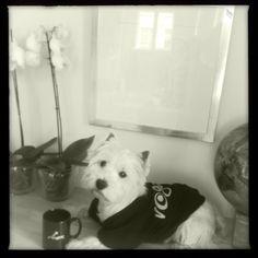 Rogzee miluje ROGZ a proto nosí i ROGZ tričko a pije z ROGZ hrníčku