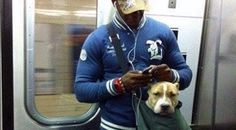 """DOG BAGS""  NYC SUBWAY BANS DOGS UNLESS THEY ARE IN A BAG.  ""SAVE A DOG AND SAVE A VETERAN"". TRAINING RESCUE/SHELTER DOGS TO SERVE AS SERVICE DOGS FOR CIVILIANS AND, FREE, FOR U.S. VETERANS. www.DogEvolution.us (Service Dog Training) (http://dogtrainingorangecountyca.com/)www.DavidUtter.com David Utter, Dog Trainer: Separation Anxiety, SERVICE AND THERAPY Dogs, PTSD, Depression, Panic Attacks, Behavior Modification, Water Rescue, Obedience. TRAIN AND BOARD. 1-888-959-7463"