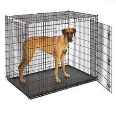 MidWest Extra Large Dog Breed (Great Dane) Heavy Duty Metal Dog Crate w/ Leak-Proof Pan, Double Door Giant Dog Crate measures 54L x 37W x 45H Inches & Weighs 80.2 lbs. - The extra (extra, extra, extra) large double door metal dog crate by MidWest Homes for Pets, Solution Series (model SL54DD), is a metal dog crate specifically designed for the largest breed of dogs including Great Danes, Mastiffs, St. Bernard's, etc.…. This dog crate is so large that we recommend...