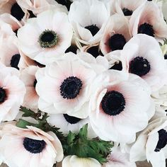white and blush anemonies • OUI wedding flower inspiration
