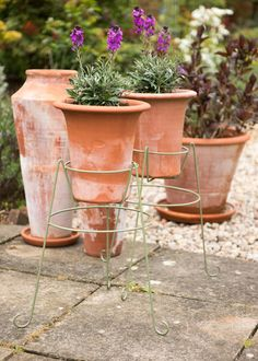 Buy Pot stand: Delivery by Crocus