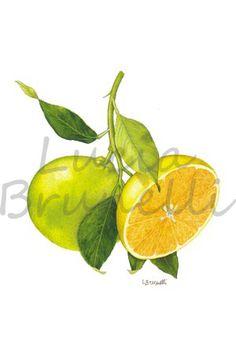 1000 images about illustrazioni di piante on pinterest for Mapo frutto