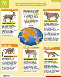 Fiche exposés : Des mammifères disparus
