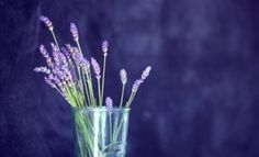 Read the latest article from the Jersey Lavender Farm - Uses of Lavender Water – And How To Make Your Own. Visit our website for of Lavender articles. Dried Lavender Flowers, Lavender Buds, Lavender Oil, Easy Gin Cocktails, Natural Skin Toner, Natural Frequency, Expensive Perfume, Healing Meditation, Abraham Hicks