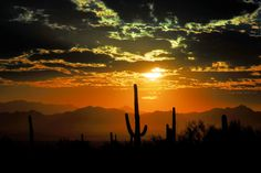 Thinking about moving to Phoenix? Here's everything you need to know about the desert paradise.