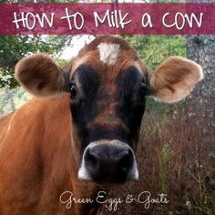 How to Milk a Cow:  This post lists step by step instructions AND includes a YouTube video on exactly how they milk!  Must see!