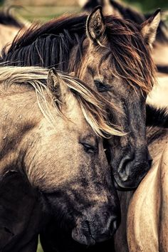 Two Horses Photo b Two Horses Photo by Kirsten Karius الحب موجود . All The Pretty Horses, Beautiful Horses, Animals Beautiful, Cute Animals, Two Horses, Wild Horses, Horse Photos, Horse Pictures, Photo Animaliere