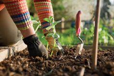 Garden Boot Camp Offered for Oklahoma Gardeners