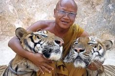 Could This man be a Real-Life Tiger Whisperer? The Answer May Surprise You (VIDEO) http://www.onegreenplanet.org/news/how-i-tamed-my-pet-tiger-video/ via @onegreenplanet