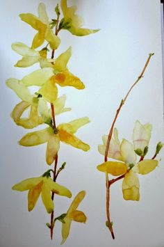 Have to get in a few forsythia paintings while I have the chance . And with last night's snow the window of opportunity may. Watercolor Art Lessons, Watercolor Paintings Abstract, Pen And Watercolor, Sketch Painting, Watercolor Flowers, Flower Paintings, Watercolors, Nature Drawing, Learn To Paint