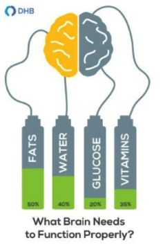 What Are the Best Brain Foods for Students?