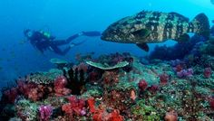 Diving at Bazaruto Archipelago in Mozambique Dive Resort, Resort Spa, Species Of Sharks, Dive Shop, Reef Shark, Best Scuba Diving, Island Resort, Archipelago, Marine Life