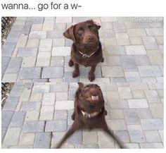 Wanna... go for a w- dog