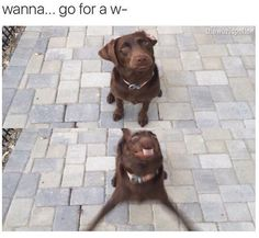 Wanna... go for a w- dog