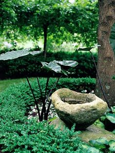 Be Creative...  An old stone became a charming birdbath in this shady spot. Almost a hidden garden, it features a few dramatic elements such as this bold purple-leaf elephant's ear.  Test Garden Tip: Shady areas of your yard don't have to be barren. Select shade-loving plants to fill it with color and texture. www.ContainerWaterGardens.net Container Water Gardens, Water Containers, Garden Projects, Garden Crafts, Garden Art, Garden Design, Water Features In The Garden, Parcs, Garden Paths