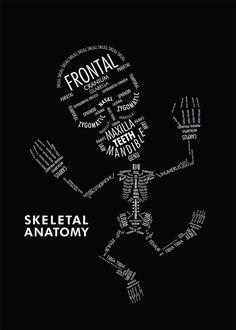 Skeletal anatomy