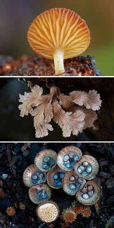 Photographer Captures the Beauty and Diversity of Australian Fungi