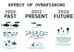 overfishing in the ocean - Google Search