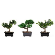 Nearly Natural Green 8.5-In. Bonsai Silk Plant Collection ($49) ❤ liked on Polyvore featuring home, home decor, floral decor, green, mini bonsai tree, tree pots, bonsai pots, miniature bonsai tree and bonsai tree