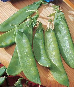 For this years garden {Pea, Mammoth Melting Sugar Heirloom} [Burpee] Get these every year, yum! Garden Seeds, Planting Seeds, Vegetable Gardening, Burpee Seeds, Winter Crops, Tomato Garden, Fruit Garden, Herb Garden, Backyard Farming