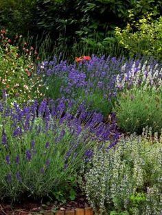 Oltre 1000 idee su giardini con fiori piccoli su pinterest - Progetti piccoli giardini privati ...