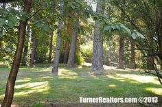 Lush greenery and an abundance of trees at Mt Tabor Park in Portland, Oregon.