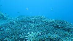 amami diving  http://www.marineblue-kakeroma.com/diving/photo/19