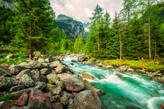 The river in the woods by Francesco Alamia on 500px