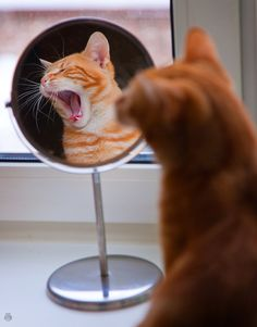 Mirror, Mirror on the stand . .   Who's the handsomest in the land?