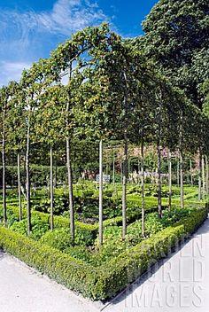 RC6164- ESPALIERED CRAB APPLE TREES, ALNWICK GARDEN : Asset ...