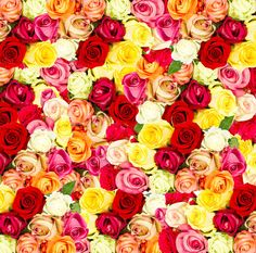 Check out Roses. Flowers by LiliGraphie on Creative Market