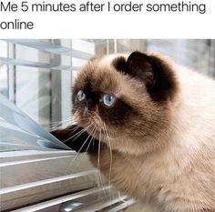 34 Memes You'll Only Understand If Cats Rule Everything Around You