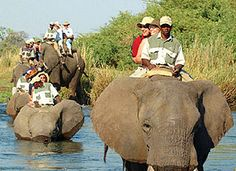Bushtracks Africa is one of the leading destination management, safari and logistics companies in Southern Africa. Discover all of Botswana, Zambia & Zimbabwe! Inner World, Livingstone, Victoria Falls, Folk Music, Family Holiday, Lodges, Archaeology, Astronomy, Safari