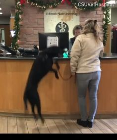 Dogaroo is excited to see the vet! He definitely don't know what is coming! Funny Animal Videos, Cute Funny Animals, Animal Memes, Funny Animal Pictures, Funny Dogs, Animales Gif, Cute Gif, Funny Cute, Funny Sarcasm