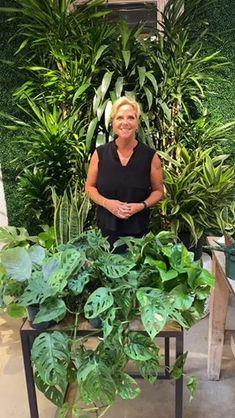 Roger's Gardens (@rogersgardens) • Instagram photos and videos Rogers Gardens, Garden Care, Indoor Gardening, Video Tutorials, Garden Styles, Garden Inspiration, Houseplants, Home And Garden, Display