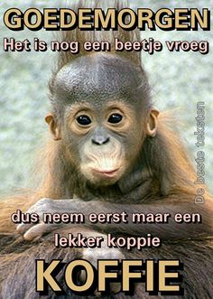 Monkey Pictures, Animal Pictures, Funny Pictures, Funky Quotes, Afrikaanse Quotes, Monkey Business, Funny Laugh, Beautiful Smile, Good Morning Quotes