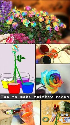 How to make rainbow roses - Natural Garden Ideas I am extremely doubtful but would love to try it. How to make rainbow roses - Natural Garden Ideas I am extremely doubtful but would love to try it. Science Fair Projects, Science Experiments Kids, Science For Kids, Fun Crafts, Diy And Crafts, Crafts For Kids, Jardim Natural, Comment Planter, Rainbow Flowers