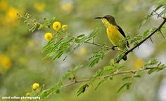 'SONG OF THE SUNBIRD' by Rahul Rallan on 500px