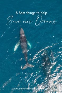 The oceans are so valuable in many, many ways. That is why it is so important to do everything that is in our power to protect them. In this blog post, we share the easiest swaps and the best things to help save our oceans. #saveouroceans #marinewildlife #oceanlove #sustainableliving Save Our Oceans, Things To Do, Good Things, Do Everything, Sustainable Living, Sustainability, Plant Based, Travel Inspiration, Wildlife