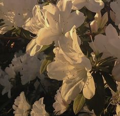 sunset white flower aesthetic soft minimalistic light korean kawaii grunge cute kpop pretty photography art artistic ethereal g e o r g i a n a : e t h e r e a l Flower Aesthetic, White Aesthetic, Aesthetic Photo, Aesthetic Pictures, Photography Aesthetic, Fashion Photography, Aesthetic Korea, Aesthetic Fashion, Girl Photography