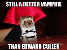 Still a better Vampire than Edward Cullen funny cute lol costume mouse halloween vampire halloween memes