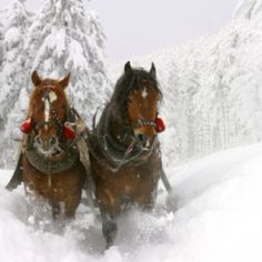 Winter holiday in the Rose of Flachau Austria. Hotel Pongauerhof
