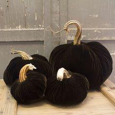 Dark velvet pumpkins--wow!