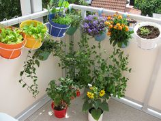 Gardening In Urban India Book not Mediterranean Garden Landscaping Ideas provide… - All About Balcony