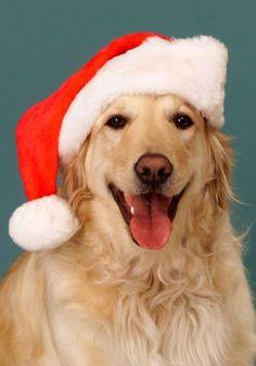#Golden Santa