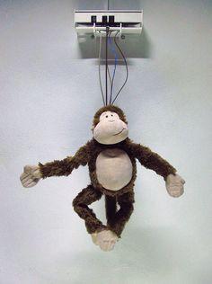 Monkey Business | Ralph Kistler