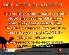 Sacrifice It is neither their meat nor their blood that reaches Allah; it is your piety that reaches Him. {Al-Quran: Al-Hajj - Ayat Eid Festival, Hadith, Good News, Quran, Allah, Wordpress, Blood, Meat, Projects